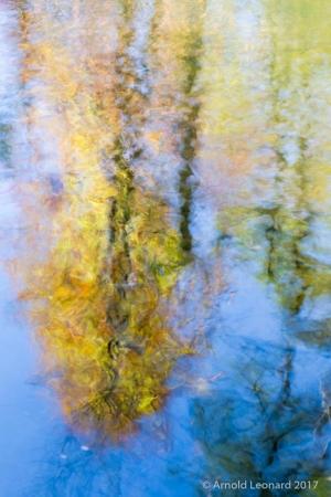 Reflected Fall Tree